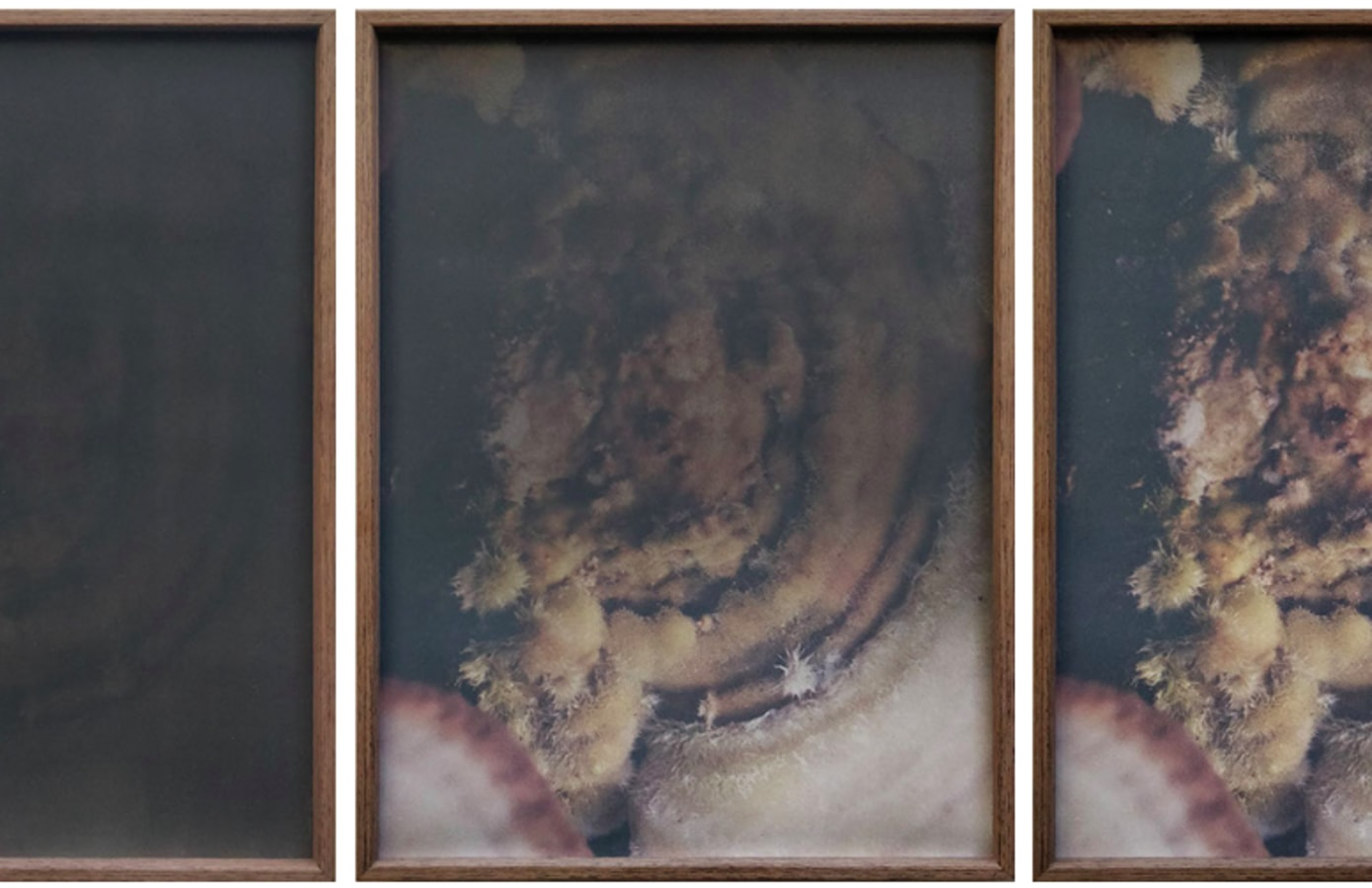 Poppositions 2019, Dries Segers,