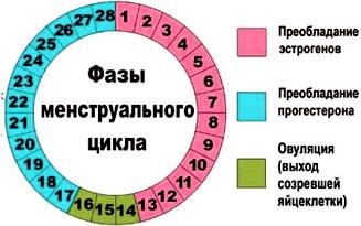 Можно ли забеременеть на 5 день цикла