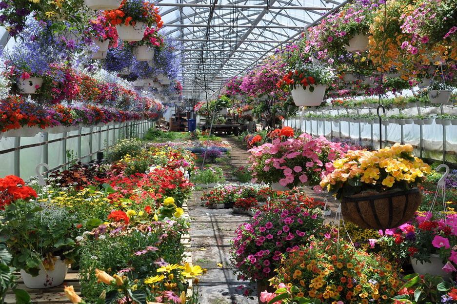 Теплицы для цветочного бизнеса