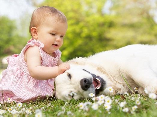 Топ самых добрых пород собак