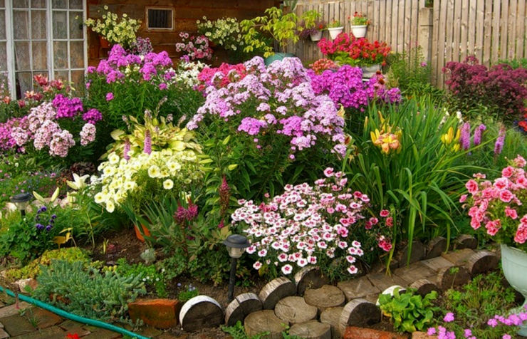 Соседство цветов на клумбе