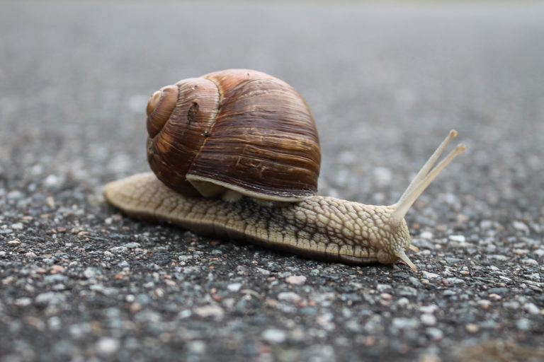 Best way to get rid of snails