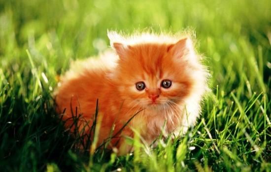 Видеть рыжих котят во сне