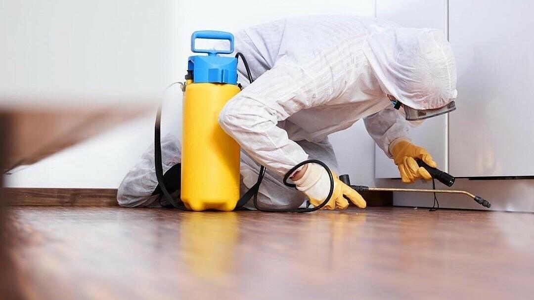 Как избавиться от клопов в квартире в домашних условиях навсегда