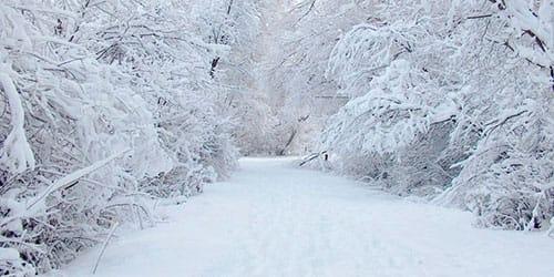 Приснился белый снег к чему