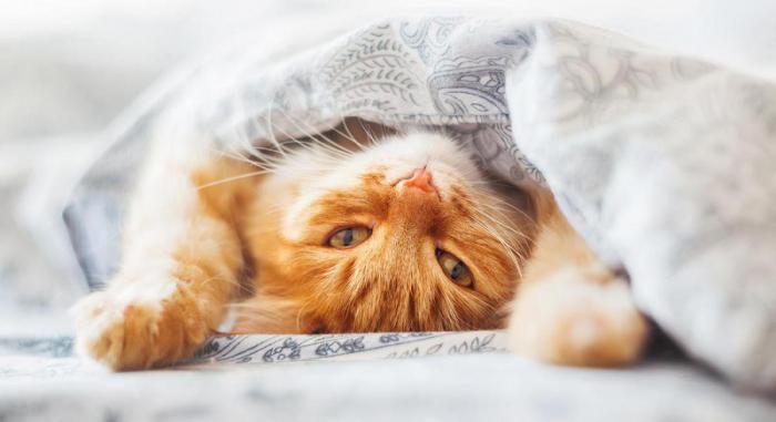 Спать с котом