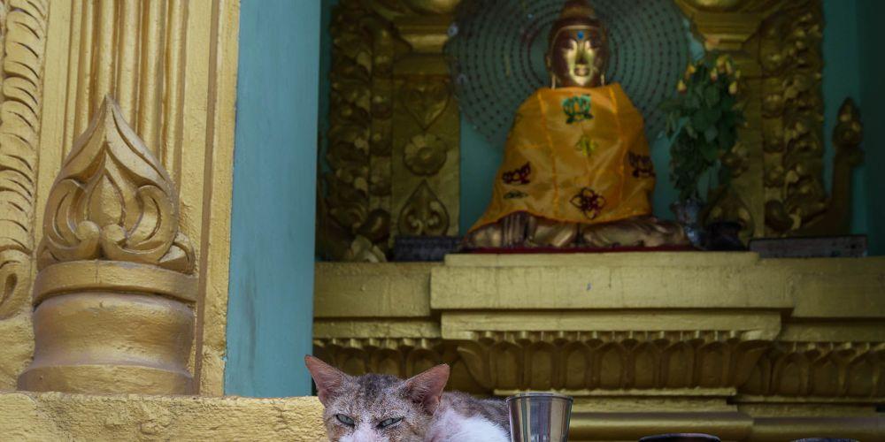 stray_kitten_myanmar