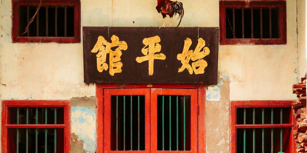 rooster_in_yangon_myanmar