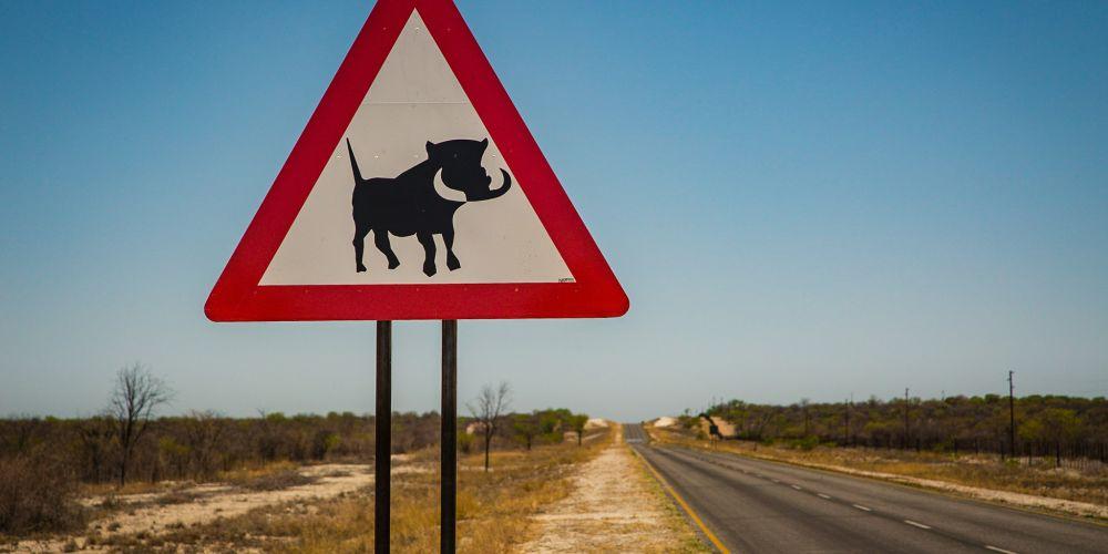 warthog_sign_namibia