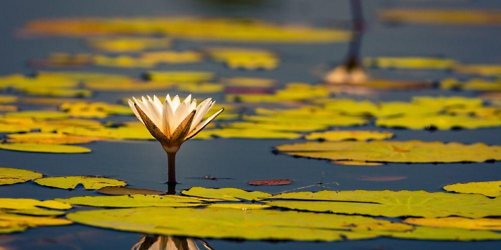 blooming_okavango