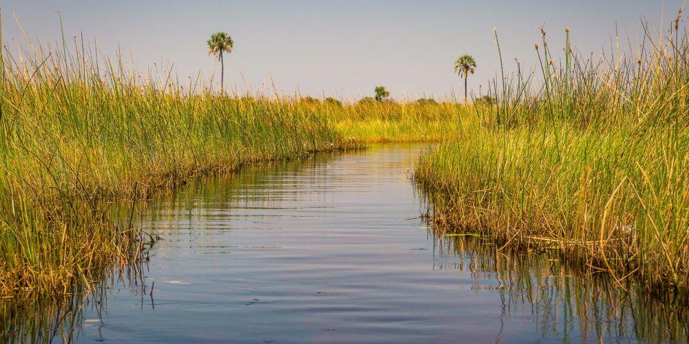 okavango_delta_canal