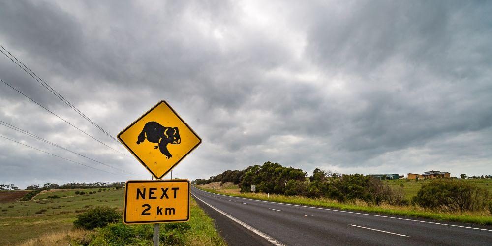 australia_koala_sign