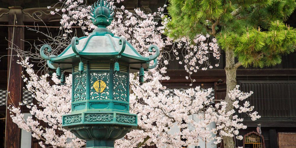 Japan_Lantern_and_Cherry_Blossoms