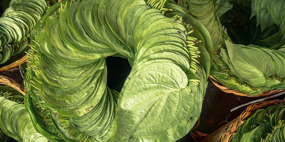 myanmar_betel_leaves
