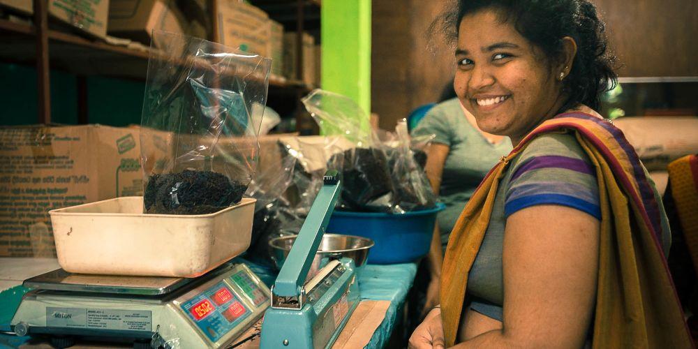 tea_processing_srilanka