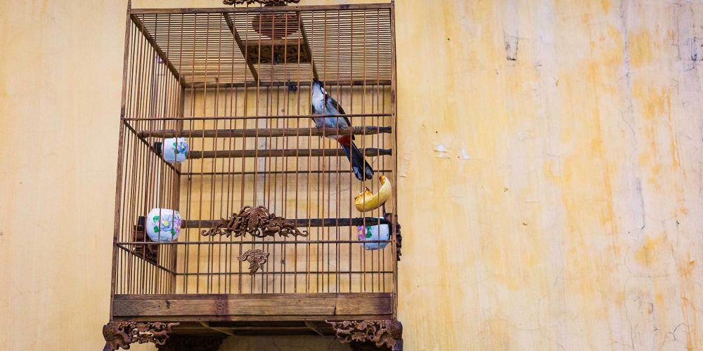 vietnam_luck_birds