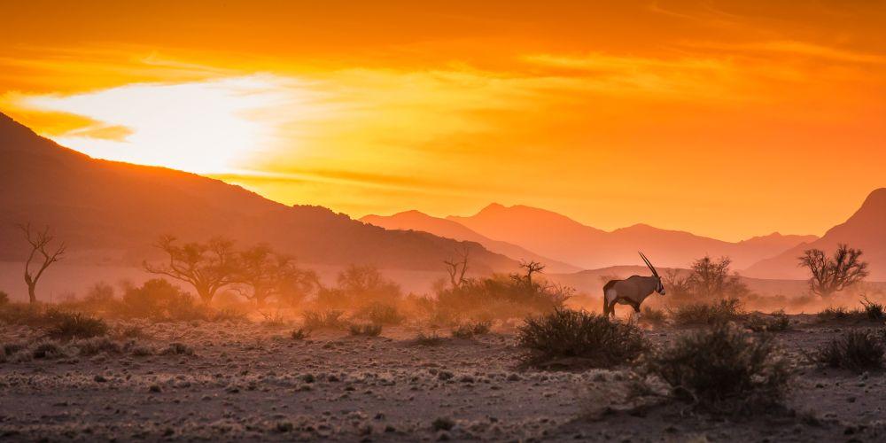 Namibia_gemsbok_sunset