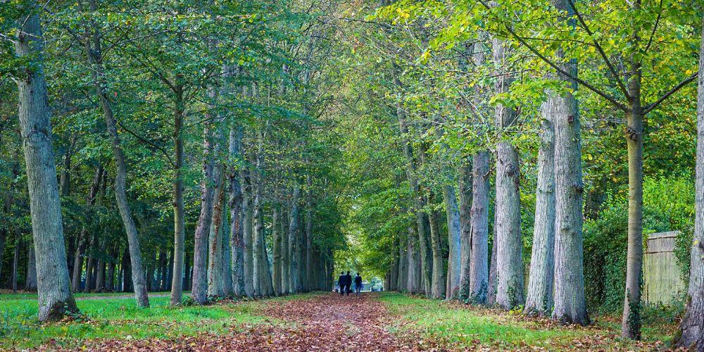 France_tree_walkway