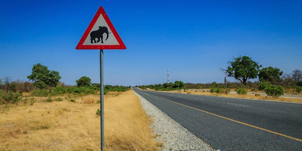 africa_warthog_sign