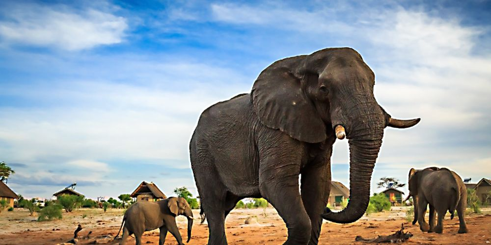 elephant_sands_elephant