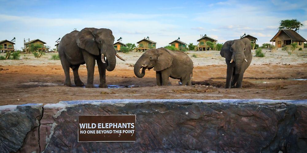 elephant_sands_botswana