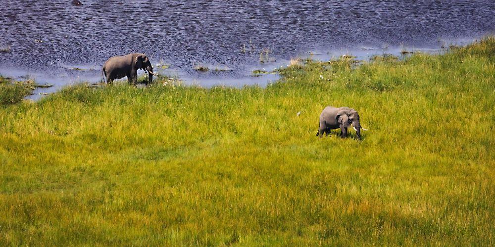 botswana_okavango_elephants