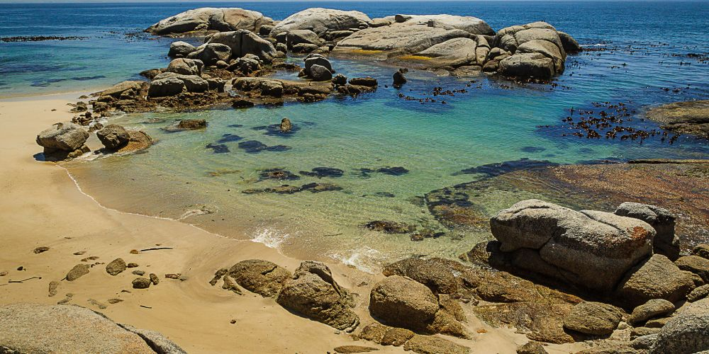 boulders_beach_south_africa