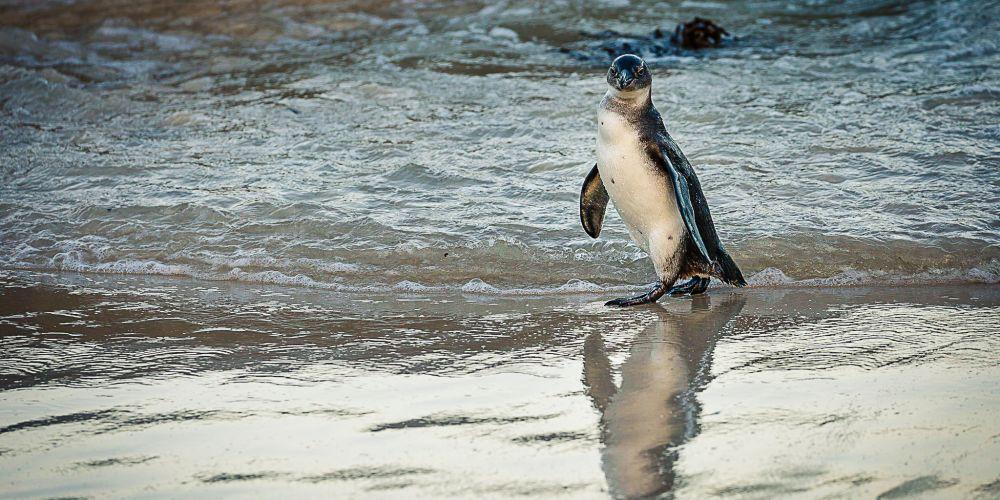 south_africa_penguin_beach