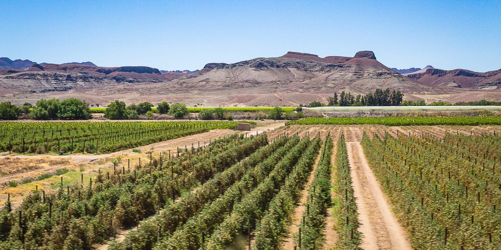 south_africa_vineyards