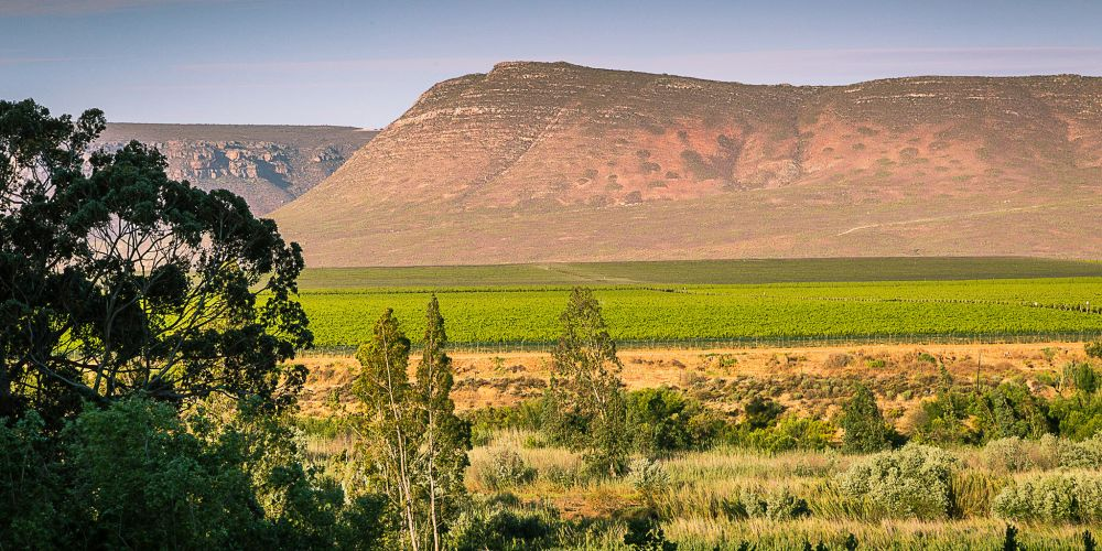 south_africa_mountains_vineyards
