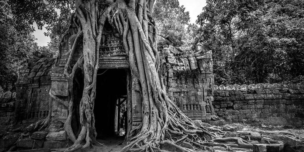 cambodia_temple_tree_roots_ta_som