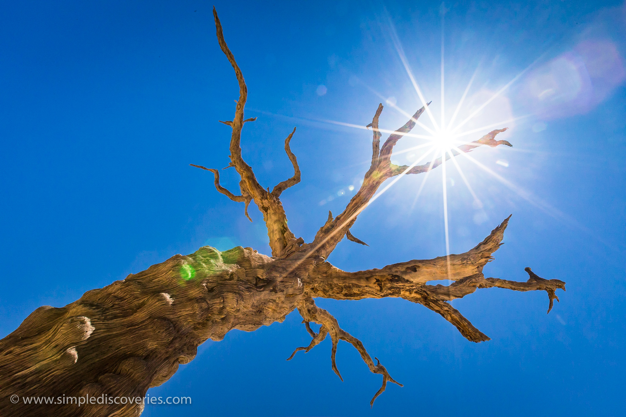 namibia_dead_tree