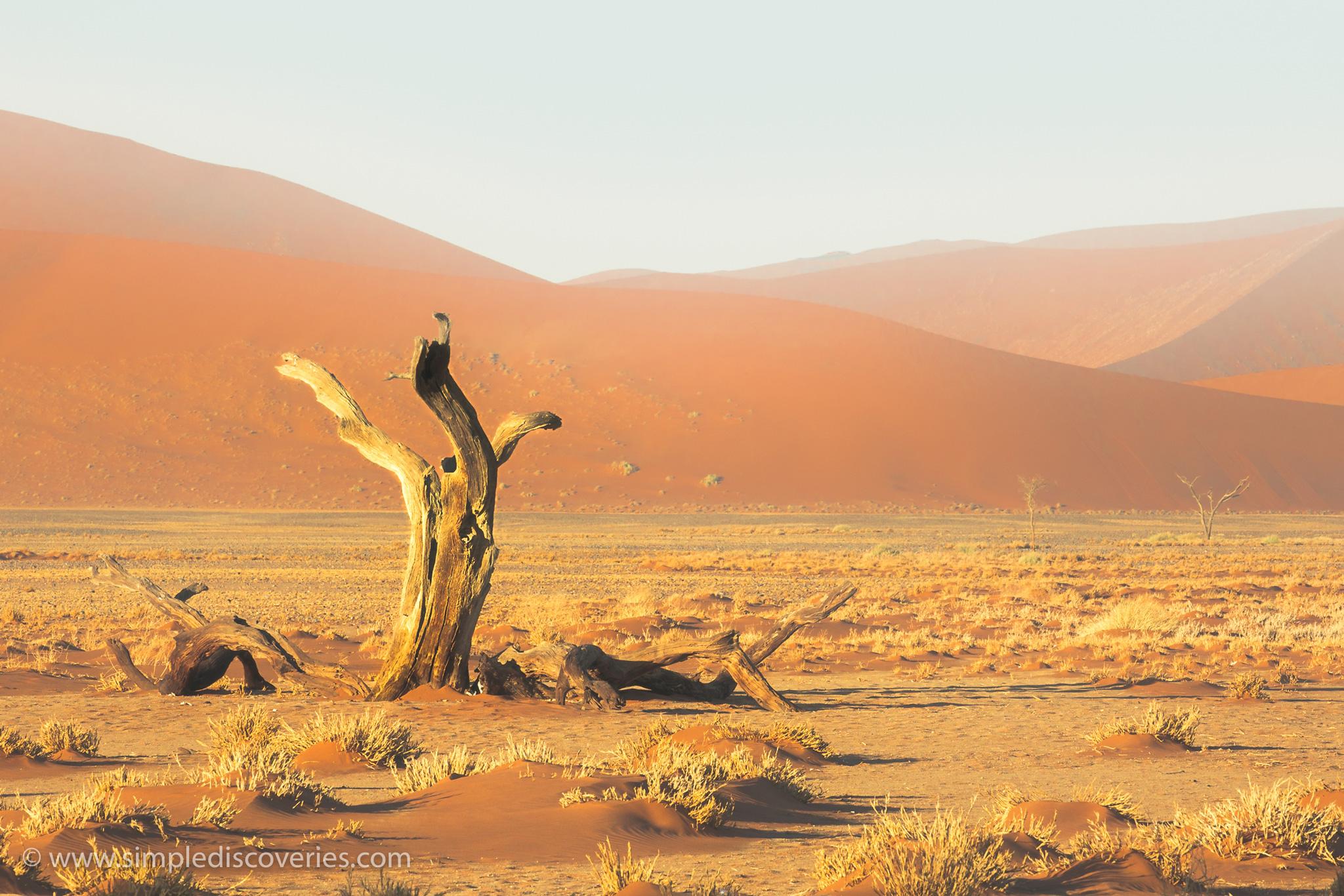 dead_sossusvlei_namibia