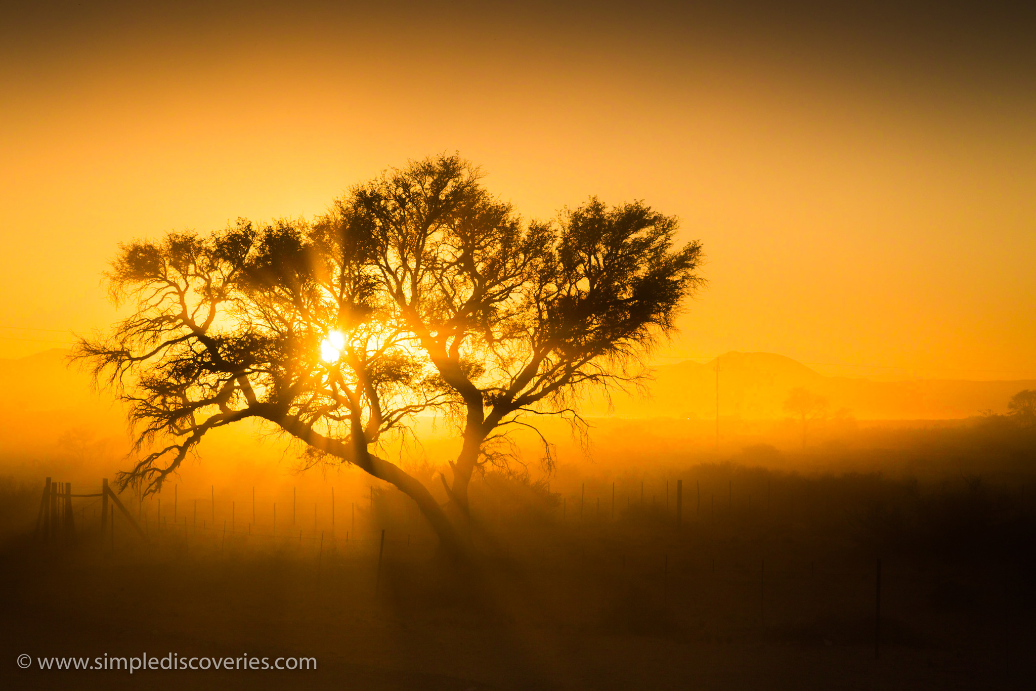 namibia_sunrise_tree
