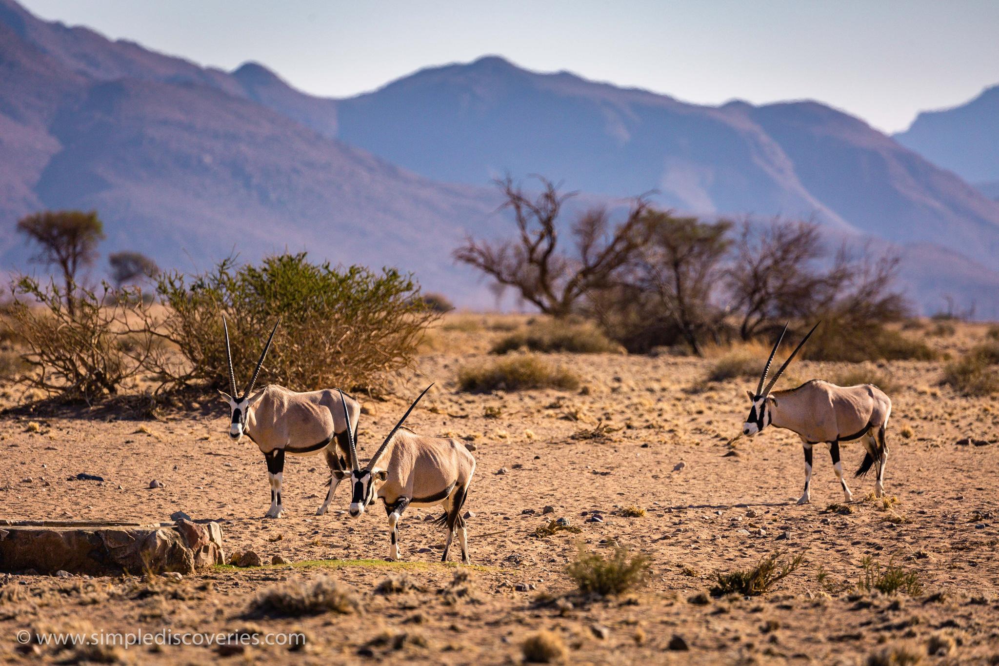 namibia_gemsbok