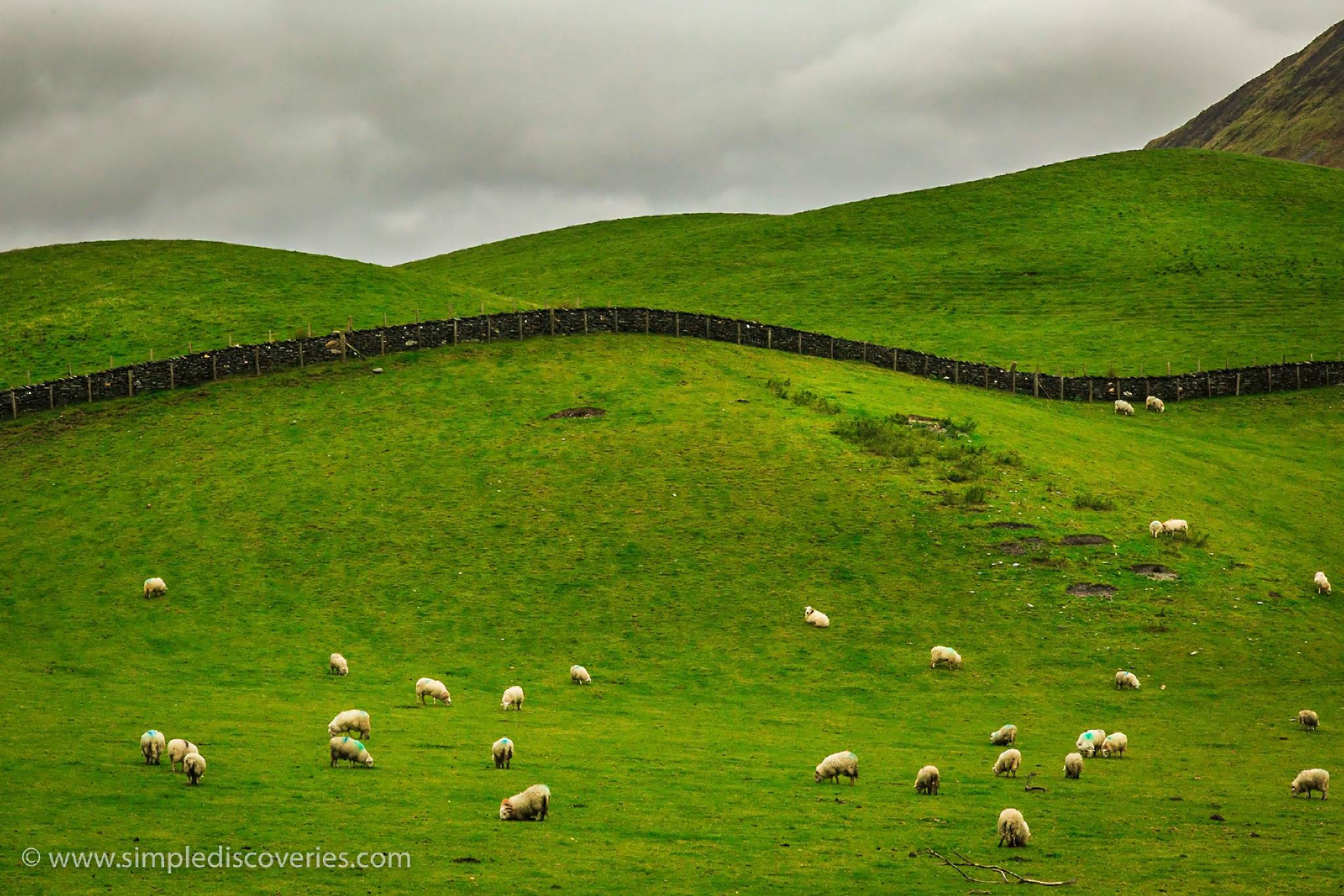 sheep_hills_united_kingdom