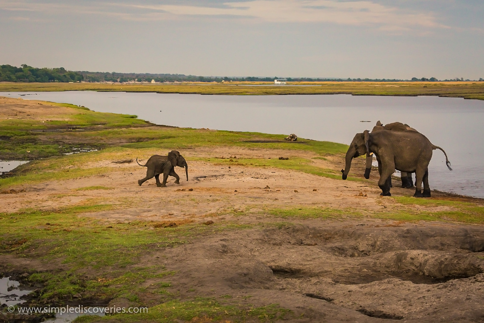 baby_elephant_running