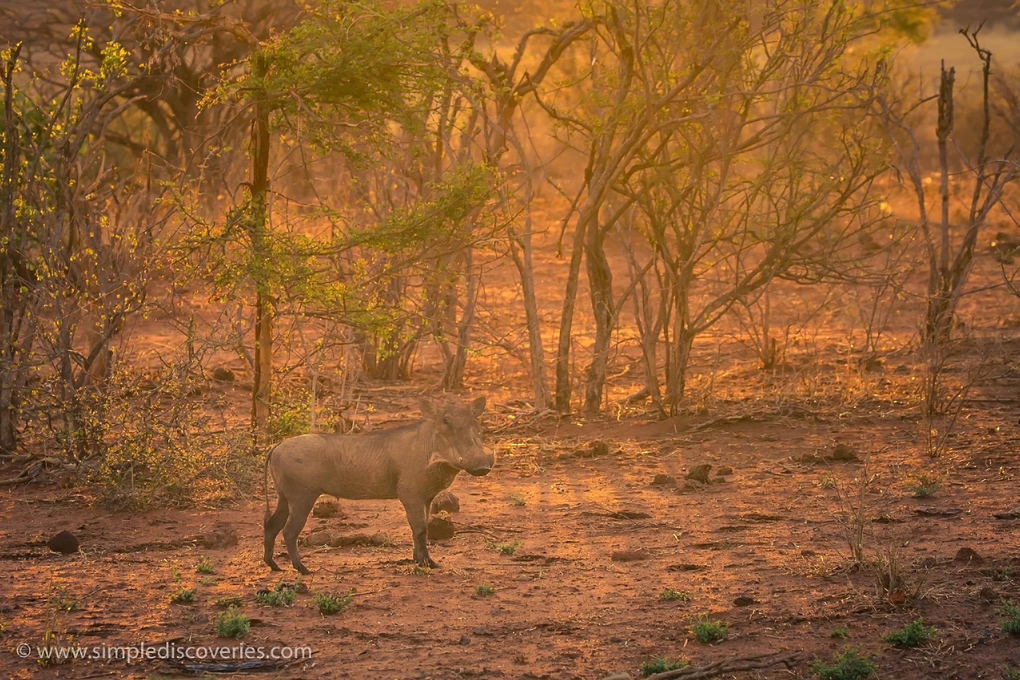 dusty_warthog