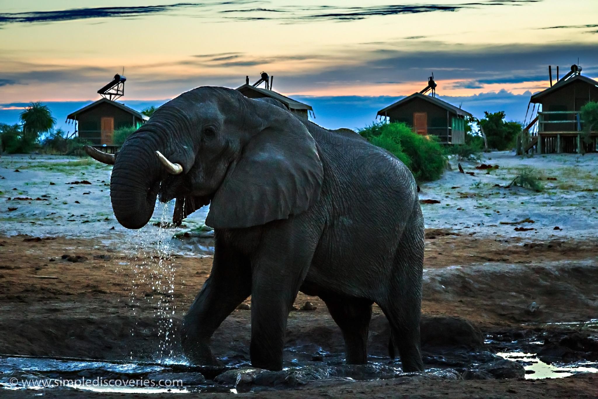 thirst_elephant_botswana