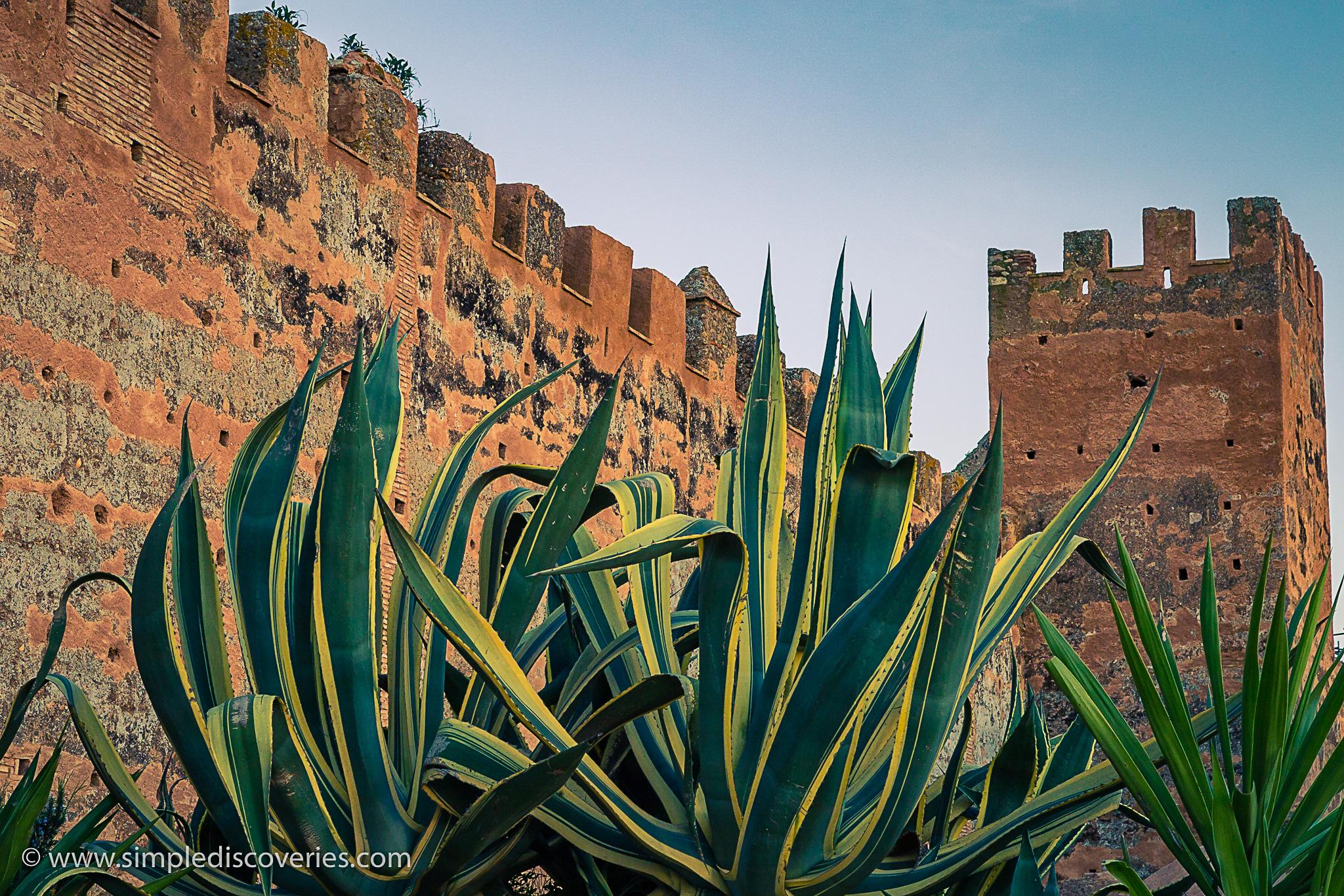 chellah_rabat_morocco