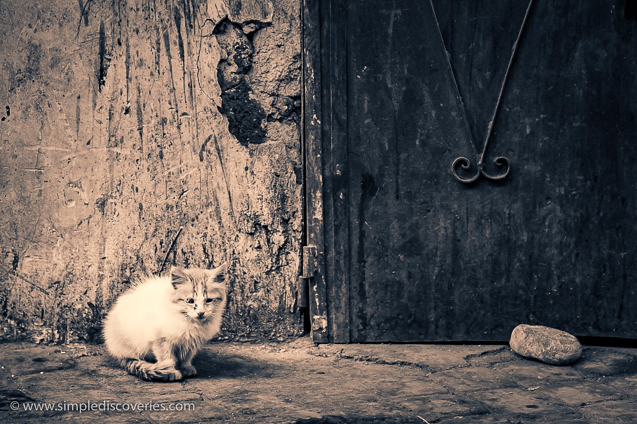 marrakech_morocco_cats