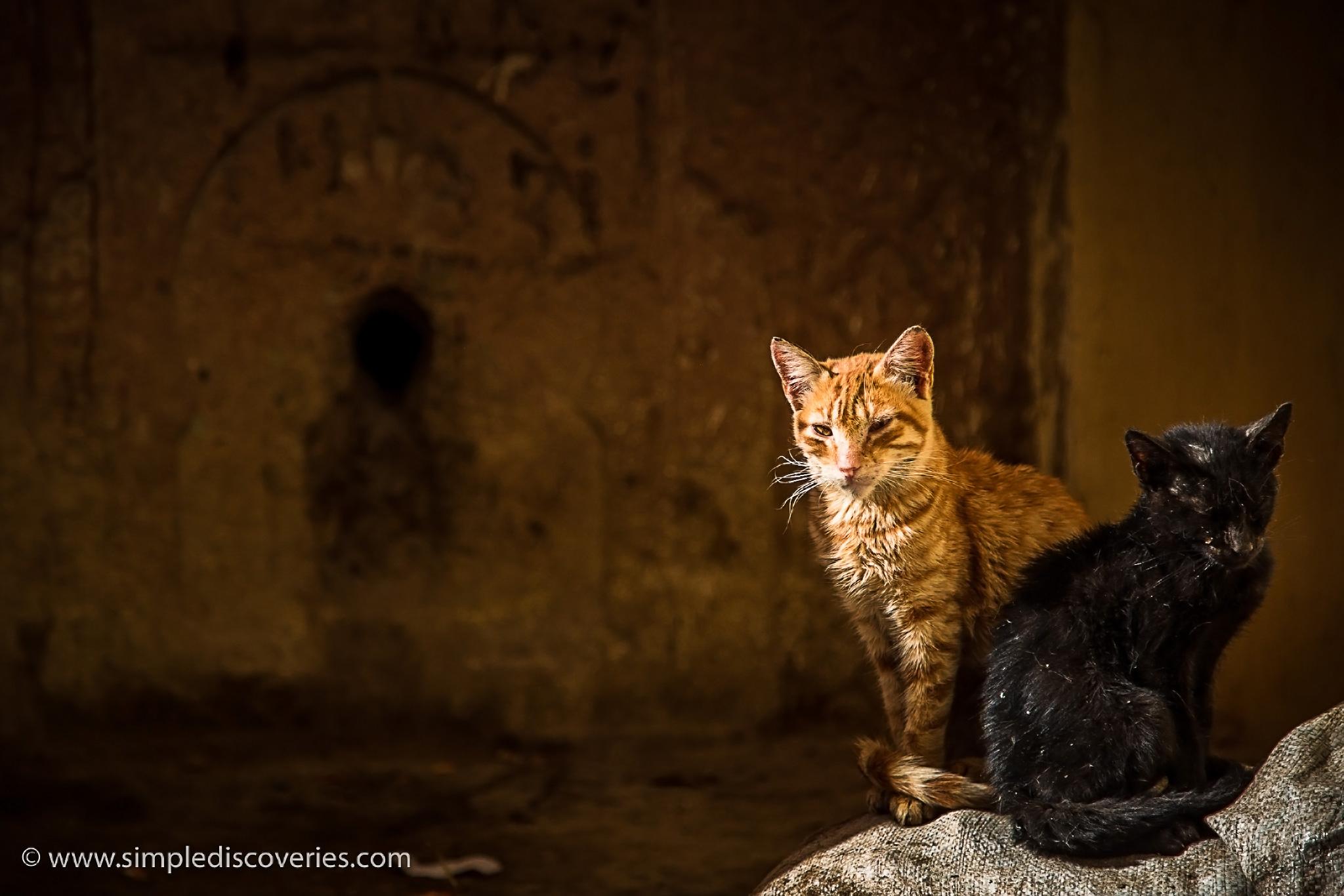 morocco_stray_cats