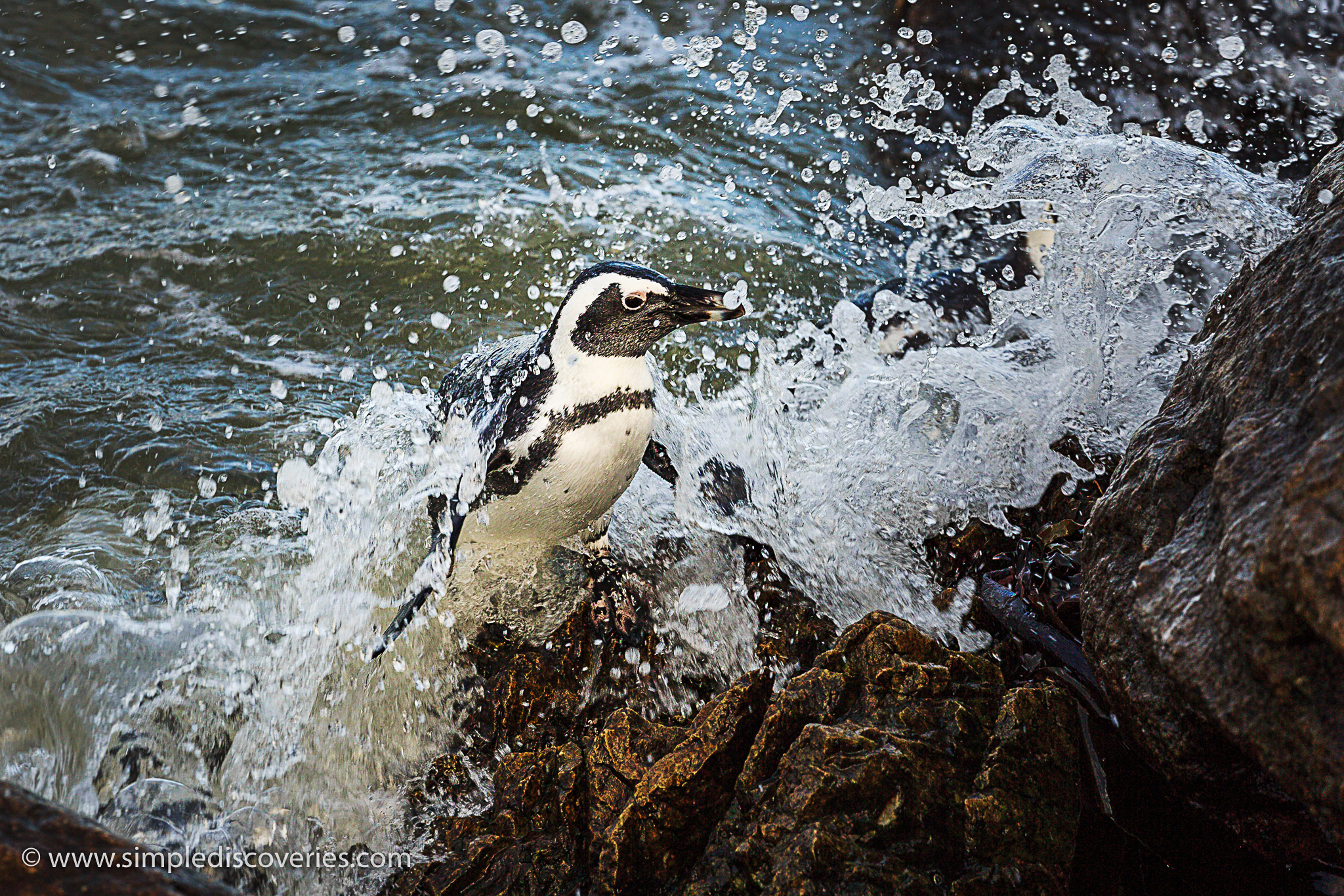 penguin_wave_splash
