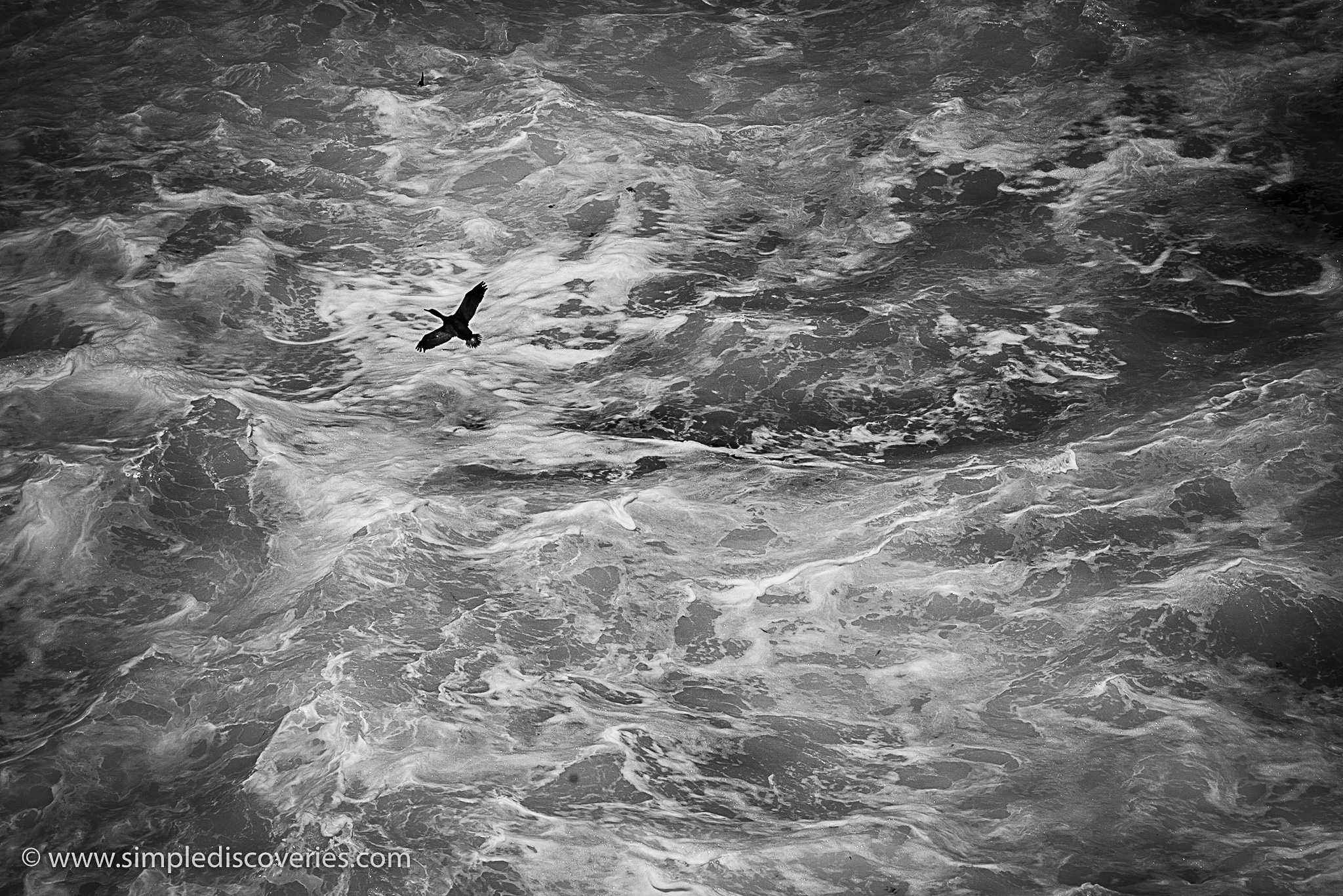 seabird_soaring_south_africa