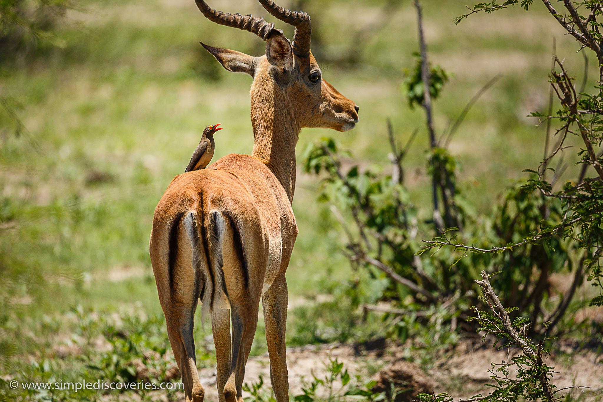 kruger_national_park_safari