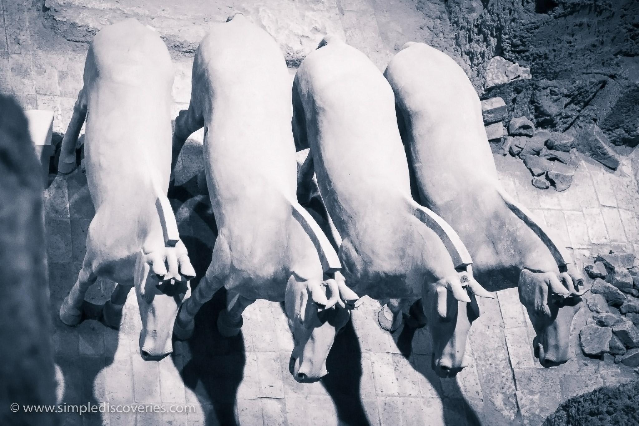 terracotta_horses_xian_china