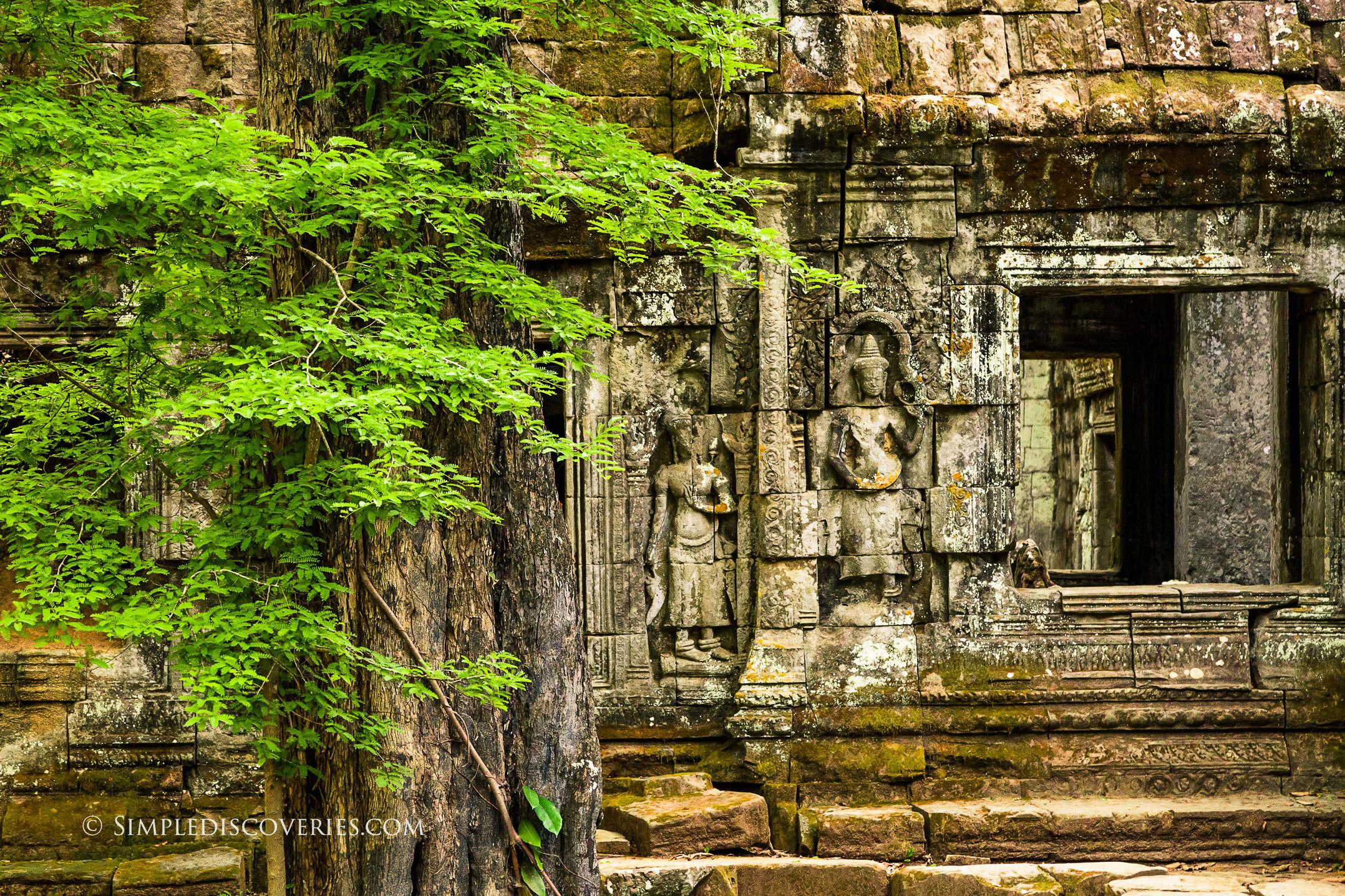 ta_prohm_temple_cambodia