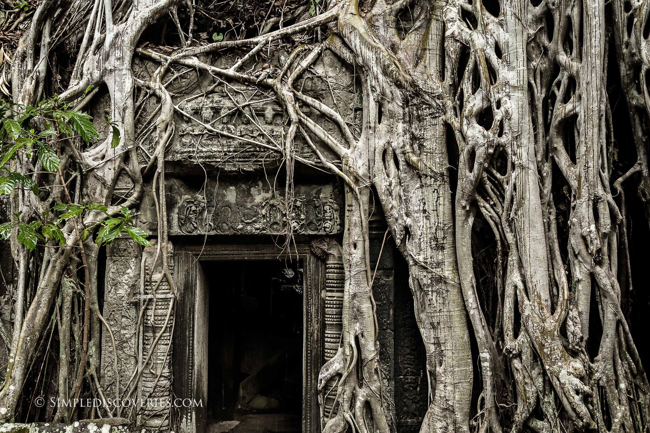 cambodia_ta_prohm_tomb_raider