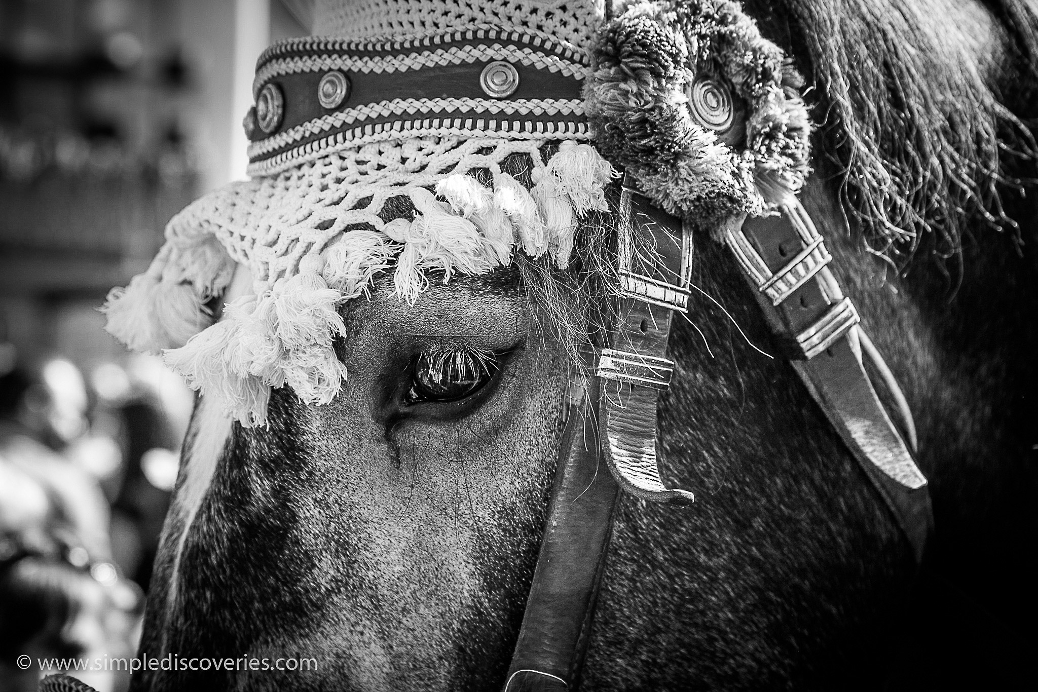 munich_oktoberfest_horses