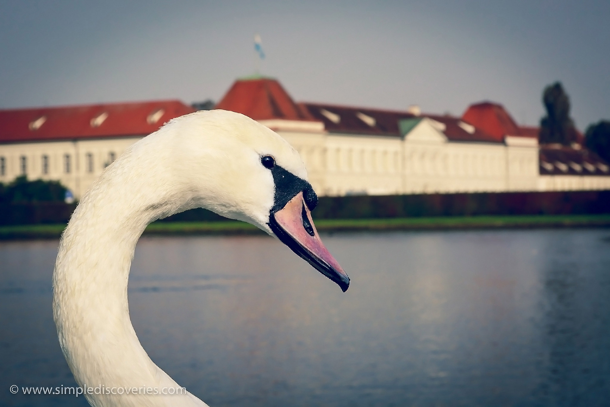 munich_nymphenburg_swan
